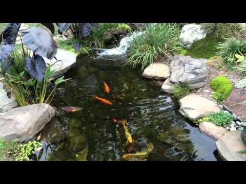 Hobby Farm Pond Rid Algae Free With This Method Doovi