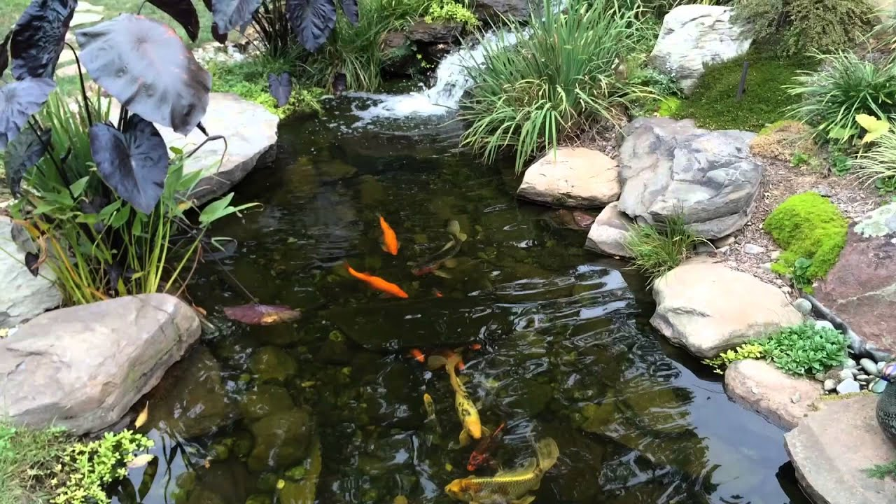 How To Get Rid Of Algae In Pond Pond Scum Baltimore