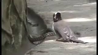 Kuşun Yavrusunu Yiyen Yılanın Ibret Verici Sonu