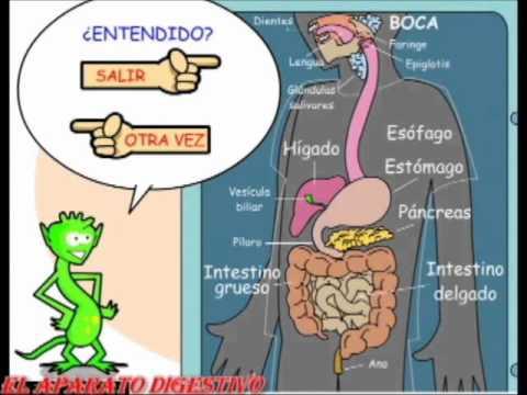 Resultado de imagen de EL APARATO digestivo supersaber