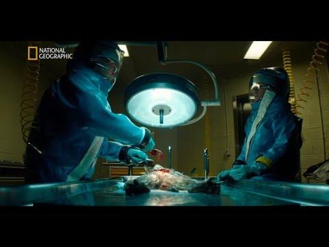 Wirus Ebola zabił wszystkie zakażone małpy w placówce [Strefa skażenia]