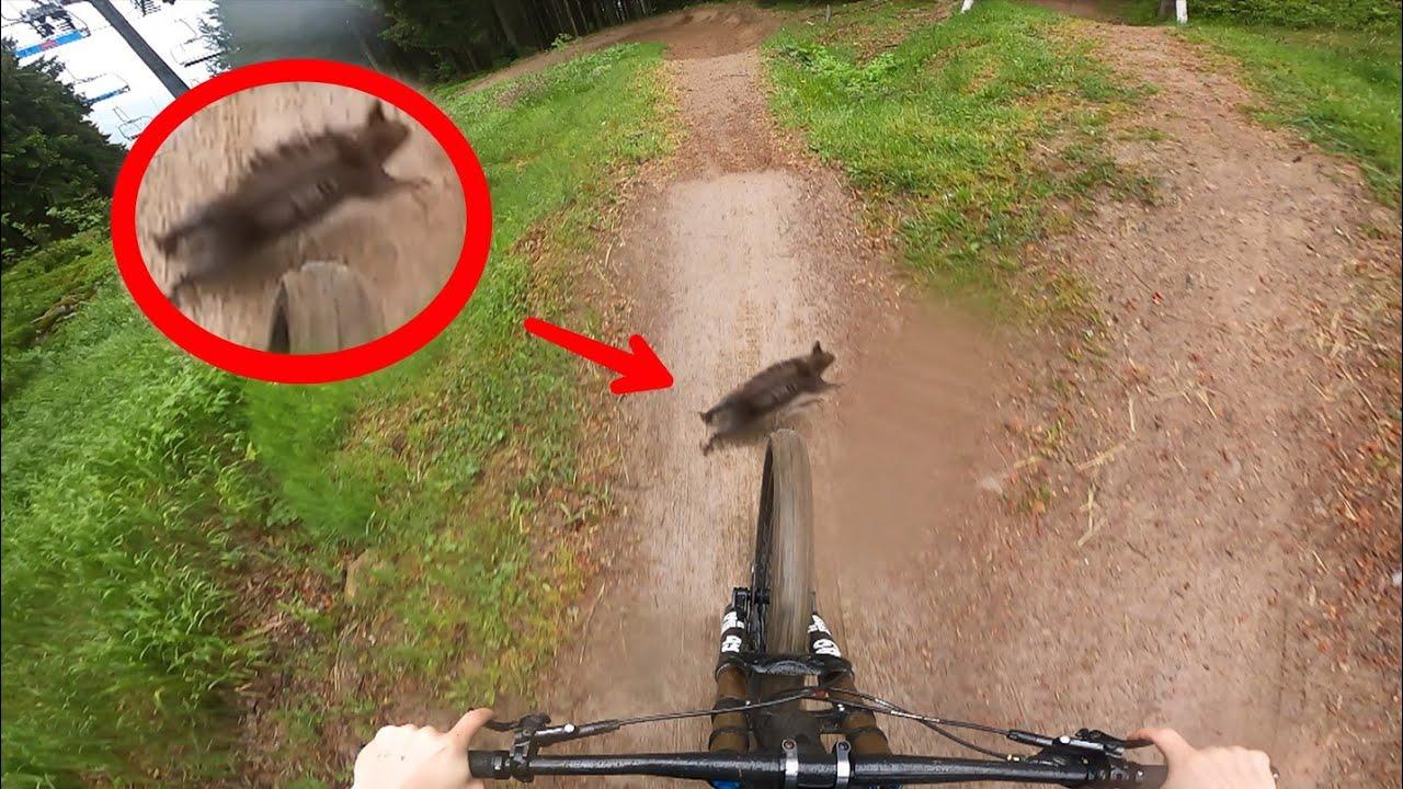 Schlammschlacht im Bikepark! Eichhörnchen überfahren? 🐿️