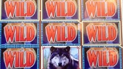 Wolf Run MAX BET ✦LIVE PLAY✦ Slot Machine Pokie at San Manuel, SoCal