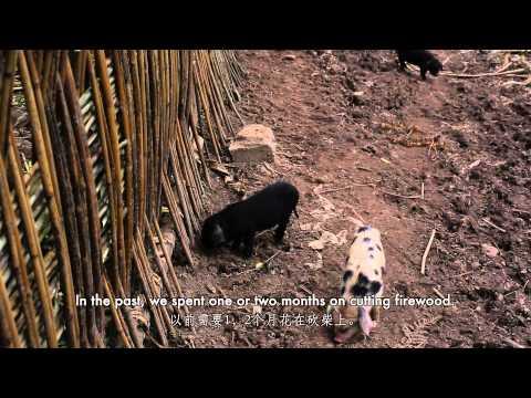WWF China, Energy Efficient Stoves