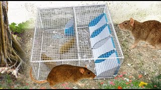 How to Make Mouse trap with new 4 Holes - Amazing quick rat trap! 126