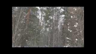Берегите русский лес!      Фильм Анны Каратцовой