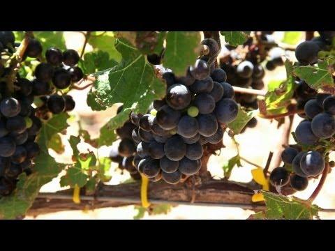 Winemaking 101 @ Vergelegen Wine Estate Part 2