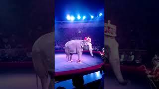 Выступление слонов в цирке г.Омска