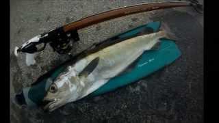 chasse sous marine trégastel bretagne