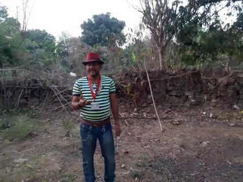 Man releasing snake non venomous(Indian rat snake)snake rescue team Panchet dam(N G O)9333320555