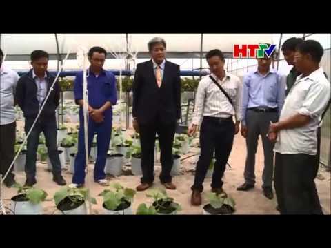 hạ tình dua lệ Chuyên gia Thái Lan tư vấn kỹ thuật trồng dưa lê, dưa lưới www thongthaiseeds com