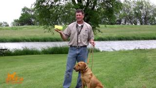 D.T. the Dog Training Video 10 | Conditioning Dogs to Gunfire