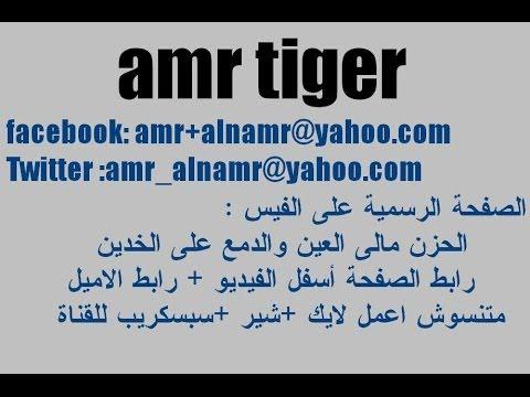 بحبك كل يوم أكتر - للفنان الكبير محمد حماقى    مع amr tiger