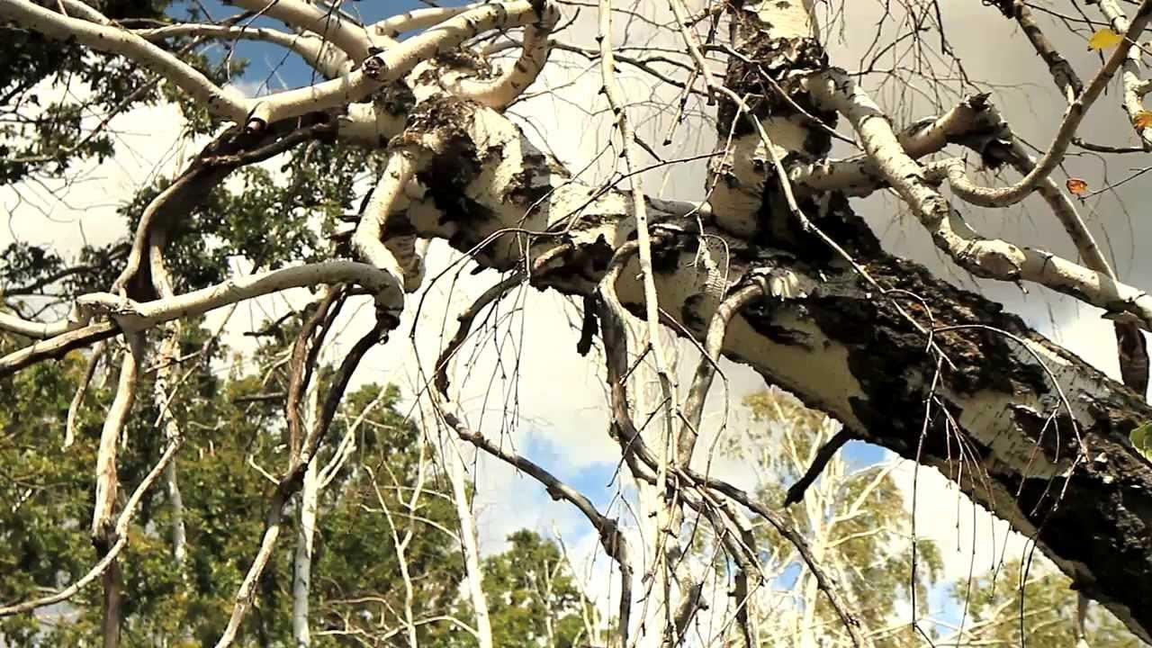 медведицкая гряда фото