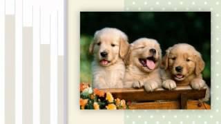 Зоомагазин товари для тварин Тернопіль недорого