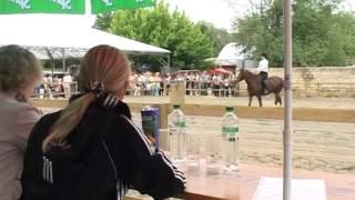Обучение верховой езде в Одессе