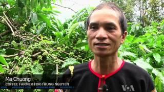 Vietnam Aims to Improve Coffee Supplier Reputation