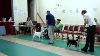 UKUSA Quagmire Best in Show and Best Puppy July West of England Bull Terrier Club 2012