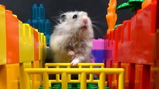 Cute Hamster Searching for Treasure in LEGO Maze - Will He be Able to Find all the Chests?