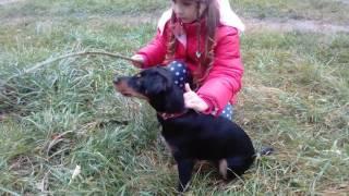 Воспитание щенка. Чем кормить собаку