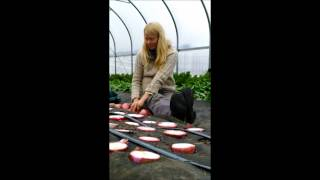 Onion Seed Production: Video #1