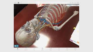 Using Augmented Reality Mode | Human Anatomy Atlas | 2019.1