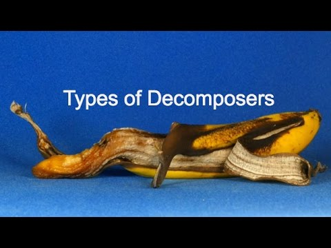 Types Of Decomposers