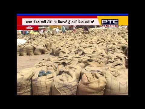 A ground report of wheat procurement in Bathinda   Punjab