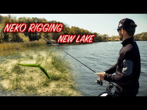 Patterning Bass With the Neko Rig on New Lakes