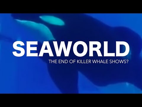 Is this the end of SeaWorld Killer Whale shows?