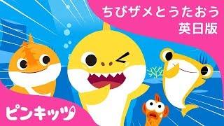 S-H-A-R-K   サメのかぞく   ちびザメとうたおう英日版   どうぶつのうた   ピンキッツ童謡