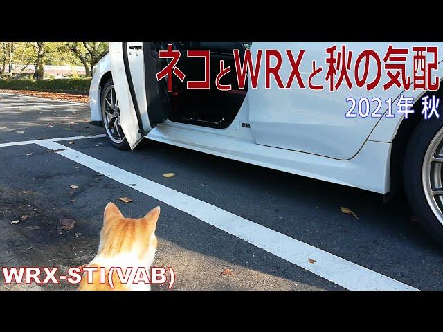 2021年秋 ネコとWRXと秋の気配 WRX STI