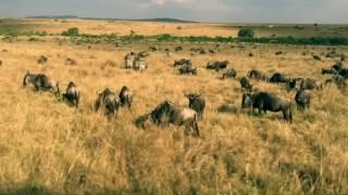 Masai Mara Safari Magic 2016