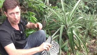 Organic Coffee Production- strategies and tricks from Don Elias coffee farm in Salento, Colombia