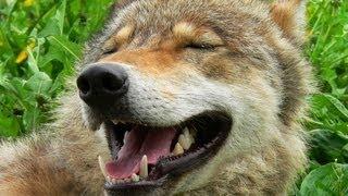 Смешные животные: волк, аист и черепаха.