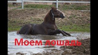 Тюнинг коня. Как помыть лошадь без водопровода.