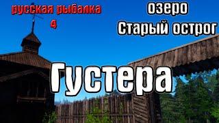 Русская рыбалка 4 рр4 rf4 озеро Старый острог Густера