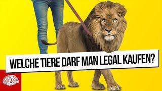 Darf ich mir einen Löwen kaufen? - Welche Tiere darf man legal halten?