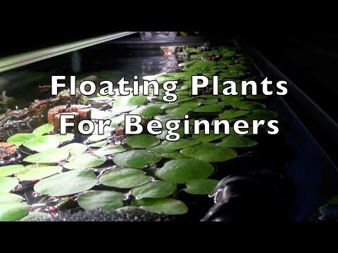 Floating Plants for Beginners
