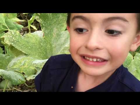 Intro to Simply Sprouts Farms