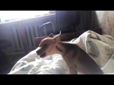 Книга Умная собачка Соня Веселые истории Андрей