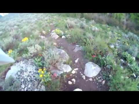 Mill Creek Trail in Alta, WY by Carl Struttmann