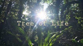 Tree of Life - いのちの木 -