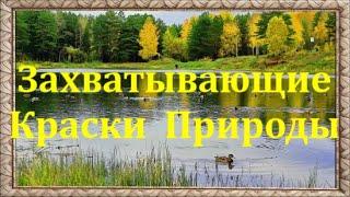 Захватывающие Краски Природы. Красивая Природа. Расслабляющая Музыка с Красивой Природой