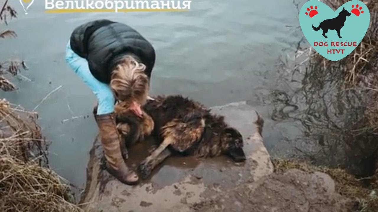 rescue poor dog was thrown into the river with a huge stone around her neck