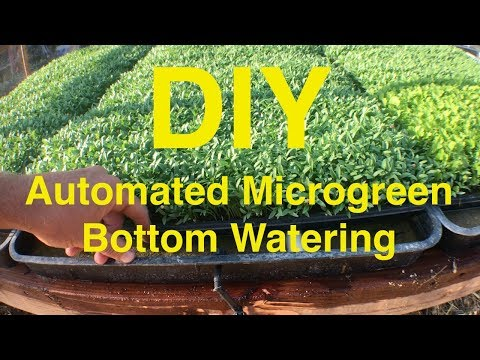Automated Microgreen Bottom Watering System - DIY