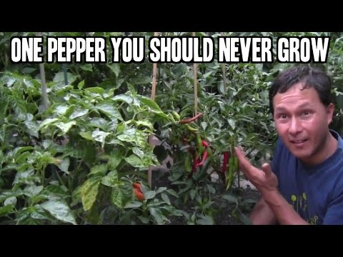 One Pepper You Should Never Grow In Your Home Garden