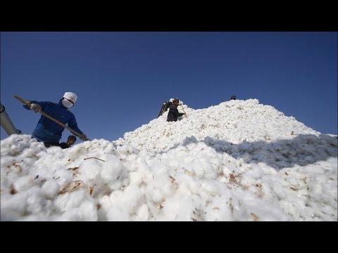 China to Start Cotton Reserves Sale July 10, Demand Seen Weak