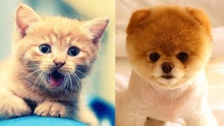 Videos Compilation best moment of the animals🐶🐱