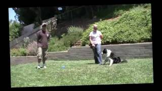 """how To' Train Your Dog To Be Calm Around People With Toys."